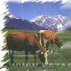 سوالات فنی و حرفه ای کارگر فنی گاو داری صنعتی-شیری و گوشتی (ادواری)