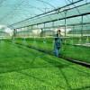سوالات فنی و حرفه ای تولید نشاء و سبزی(ادواری)