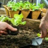 سوالات فنی و حرفه ای سبزی کاری (ادواری)