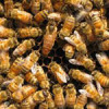 سوالات فنی و حرفه ای پرورش دهنده زنبور عسل (ادواری)