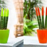 جزوه پرورش دهنده گیاهان آپارتمانی(فنی و حرفه ای)