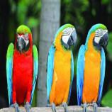 سوالات فنی و حرفه ای پرورش دهنده پرندگان زینتی (ادواری)