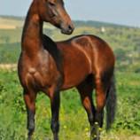 سوالات آزمون پرورش دهنده اسب